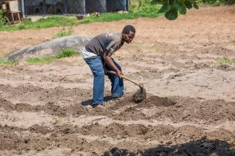 Planting (1)