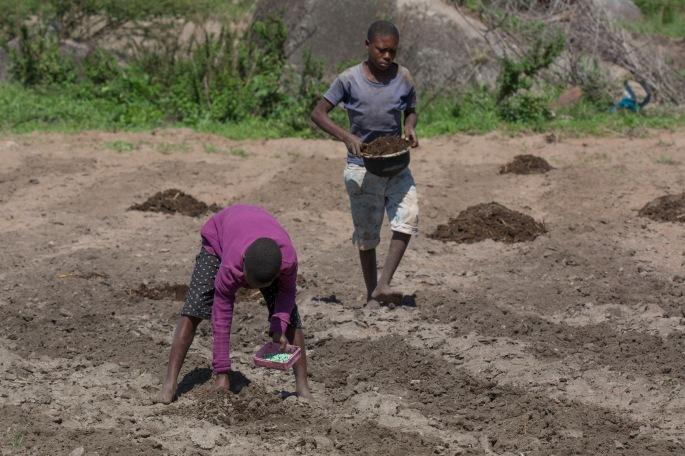 Planting (2)