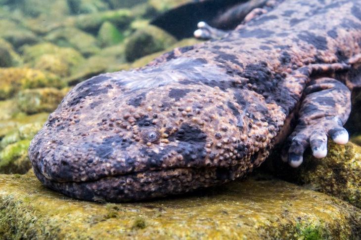 Salamander (9)