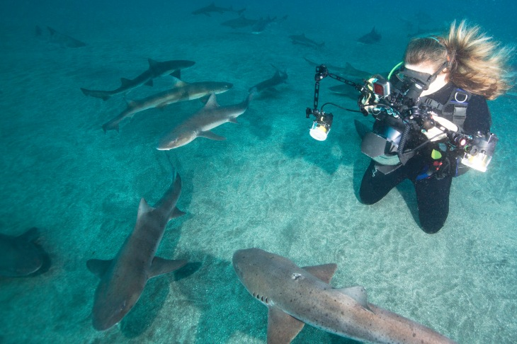 Tricia with Banded Houndsharks