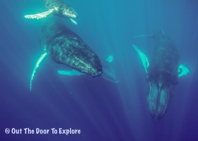 Whales X 4