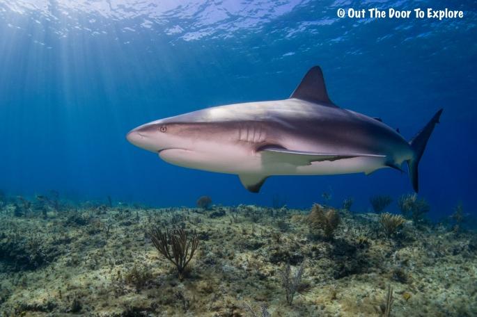 Caribbean Reef 5