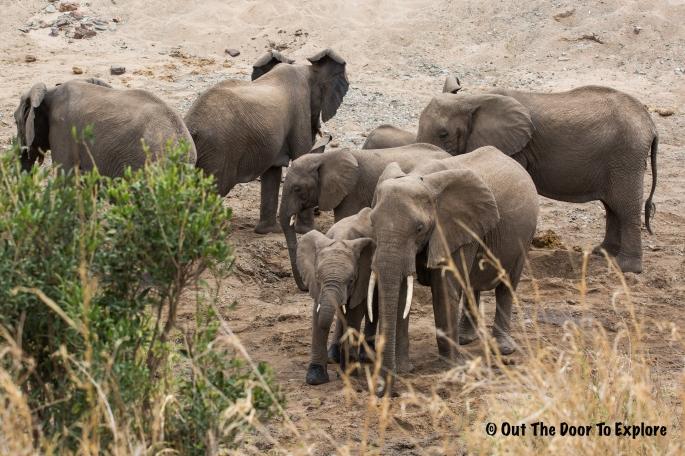 Elephants WH 2