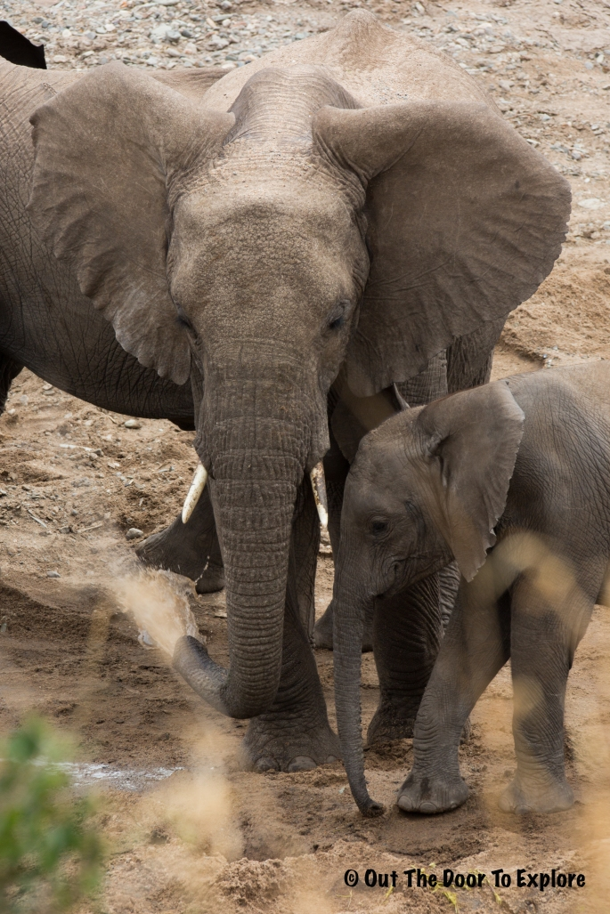 Elephants WH 6