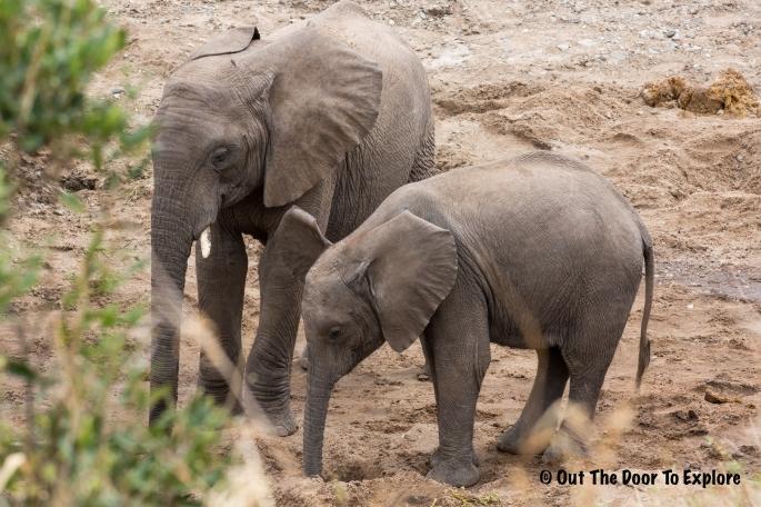 Elephants WH 8